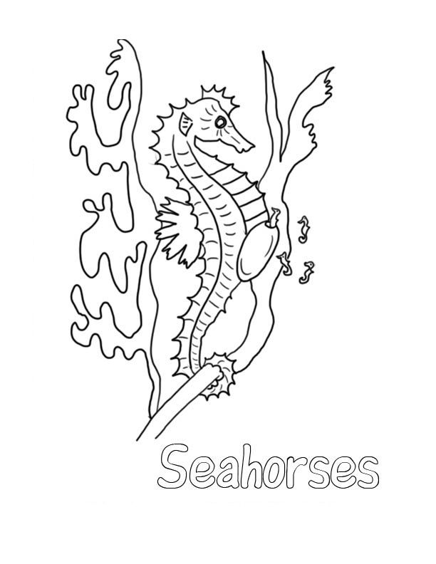 for adults Free Printable Seahorse