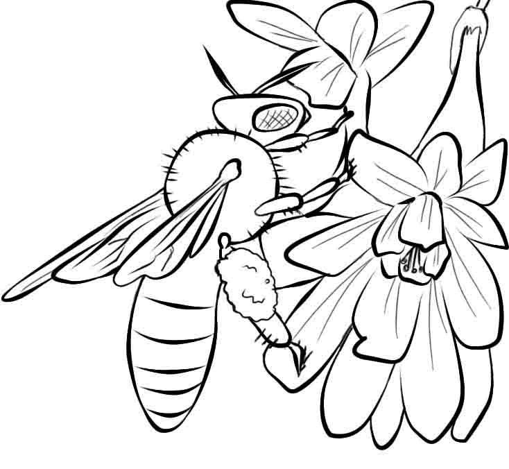 for adults Free Printable Bee Coloring Pages For Kids for adults
