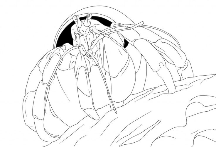 for girls Free Printable Hermit Crab Coloring Pages For Kids easy