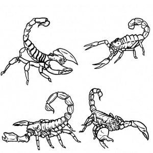 online Free Printable Scorpion Coloring Pages For Kids already colored