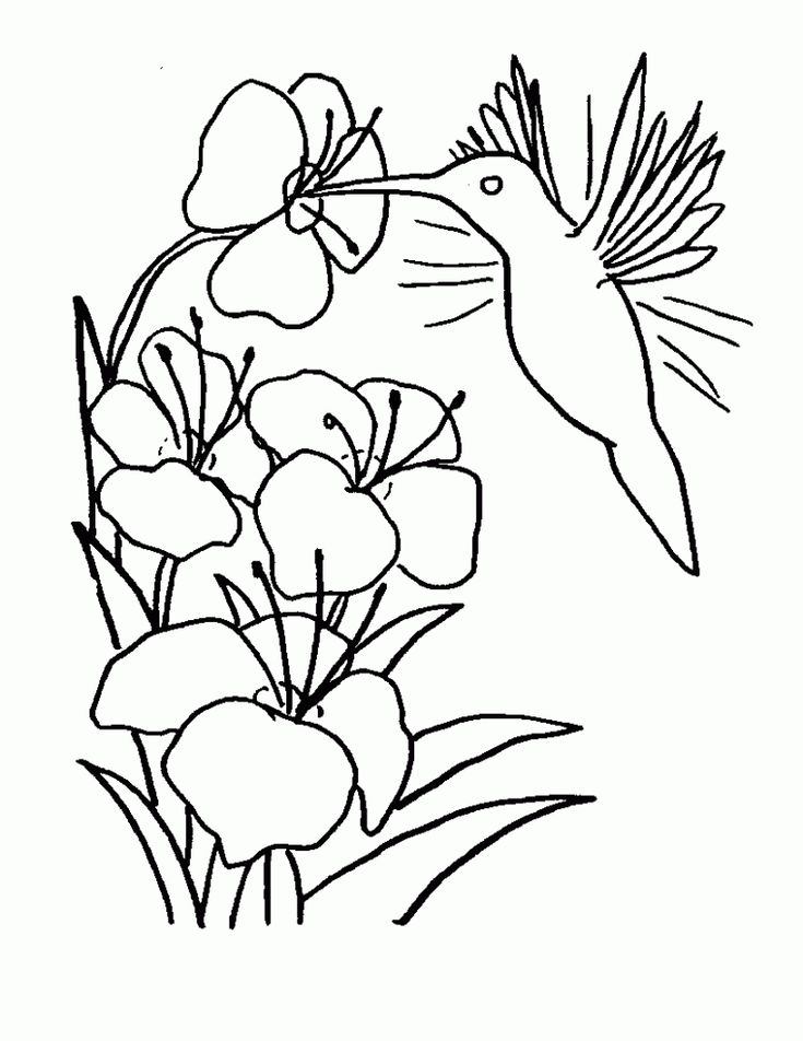 for boys Free Printable Hummingbird Coloring Pages For Kids to print out
