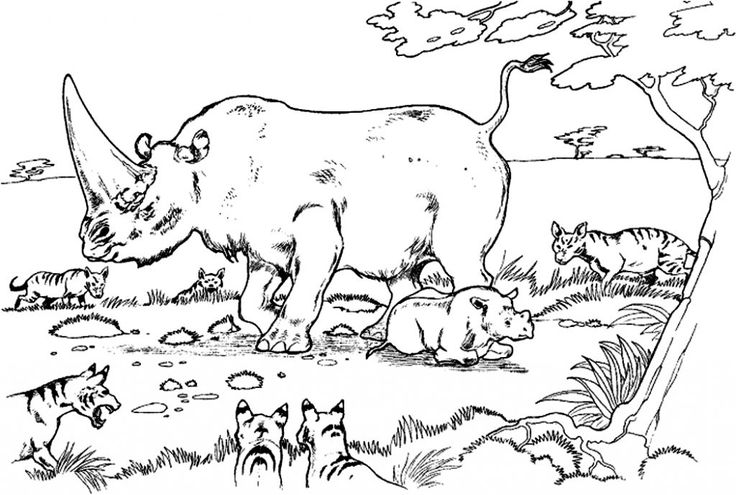 already colored Free Printable Rhinoceros Coloring Pages For Kids preschool