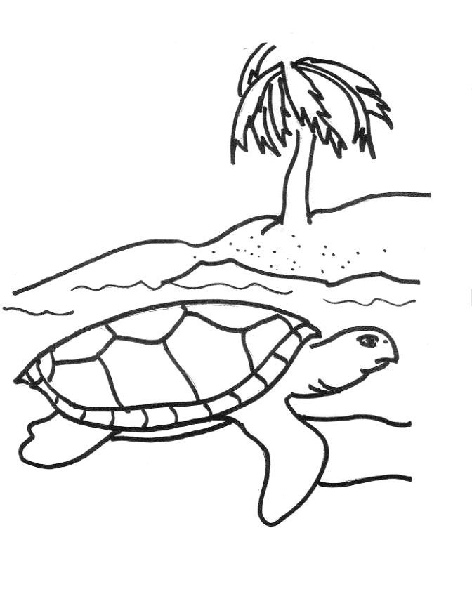 for sunday school Free Printable Sea Turtle Coloring Pages For Kids simple
