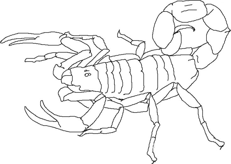 online Free Printable Scorpion Coloring Pages For Kids for boys
