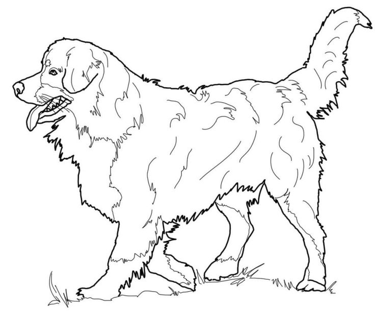 online Realistic Dog Coloring Pages for Adults for sunday school