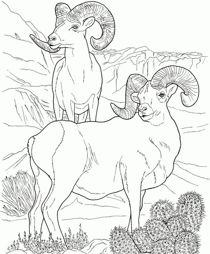 simple Desert Coloring Pages - Best Coloring Pages For Kids online