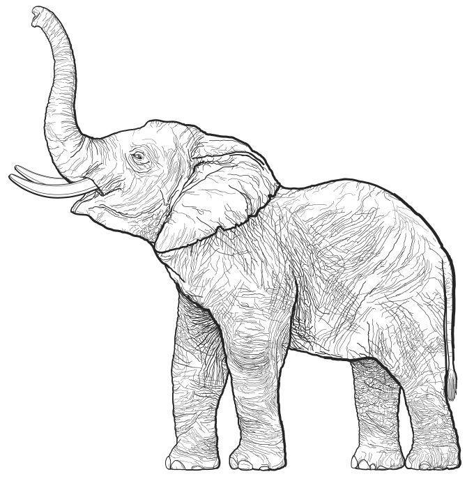 free printable Elephant Coloring Pages for Adults - Best Coloring Pages For... for adults