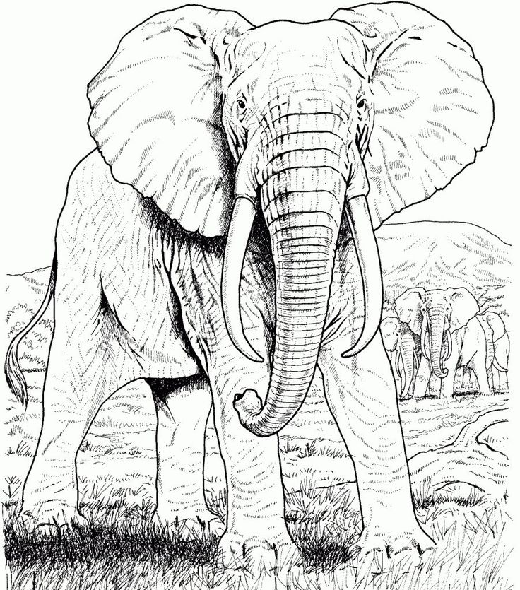 for girls Elephant Coloring Pages for Adults - Best Coloring Pages For... toddler