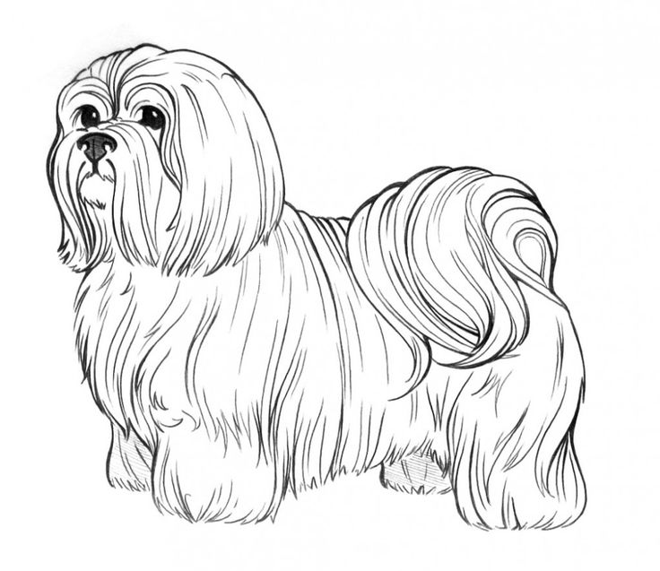 free Dogs make a great subject for art, relaxation and enjoyment.... for teens