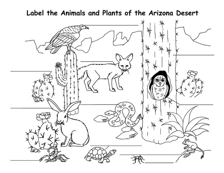 free printable Desert Coloring Pages - Best Coloring Pages For Kids free