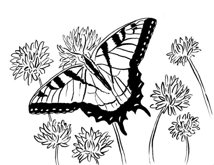 pdf Butterfly Coloring Pages for Adults - Best Coloring Pages Fo... for toddlers