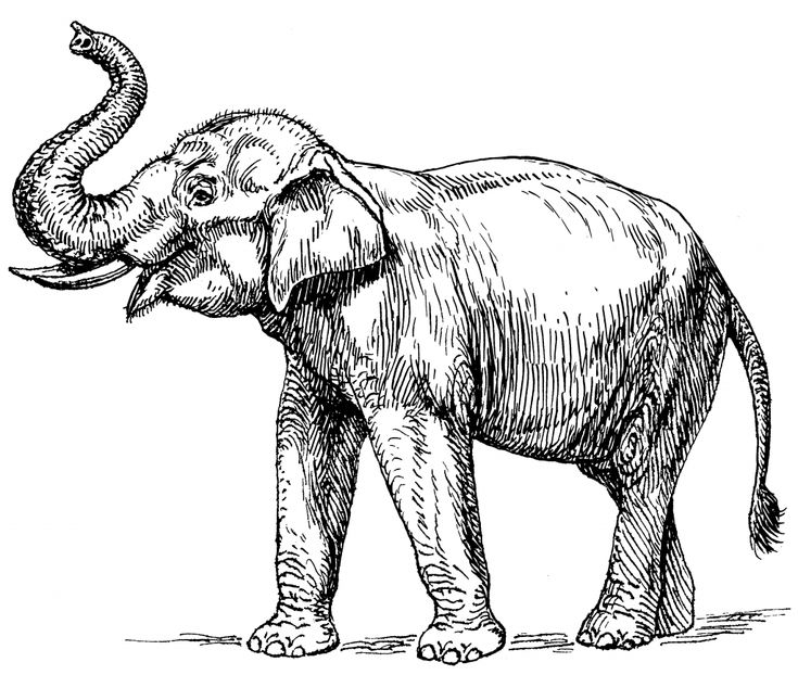 for adults Elephant Coloring Pages for Adults - Best Coloring Pages For... free printable