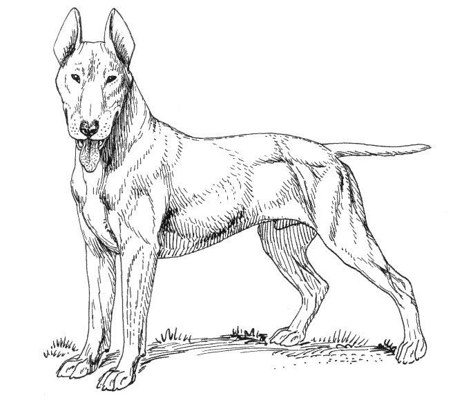 simple Dog Coloring Pages for Adults - Best Coloring Pages For Kids simple