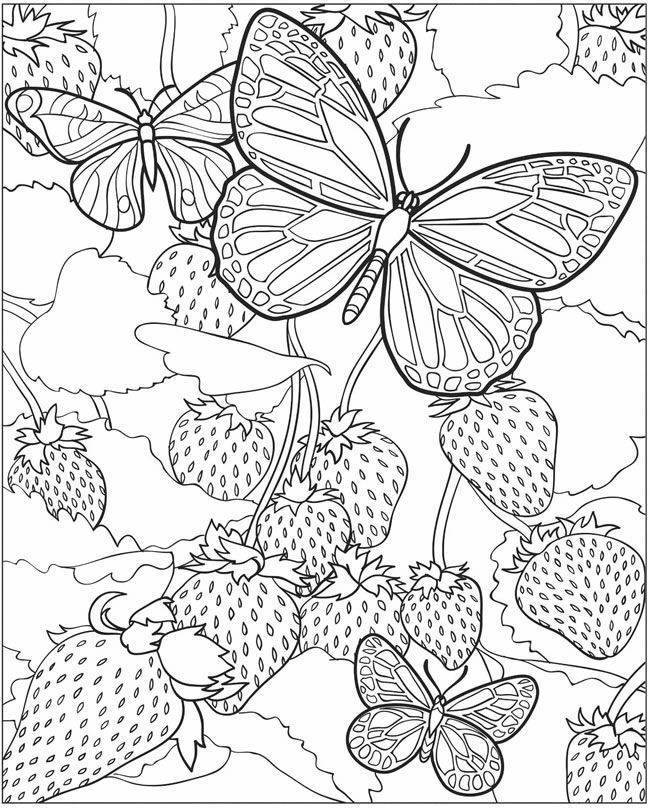 toddler Butterfly Coloring Pages for Adults - Best Coloring Pages Fo... printable