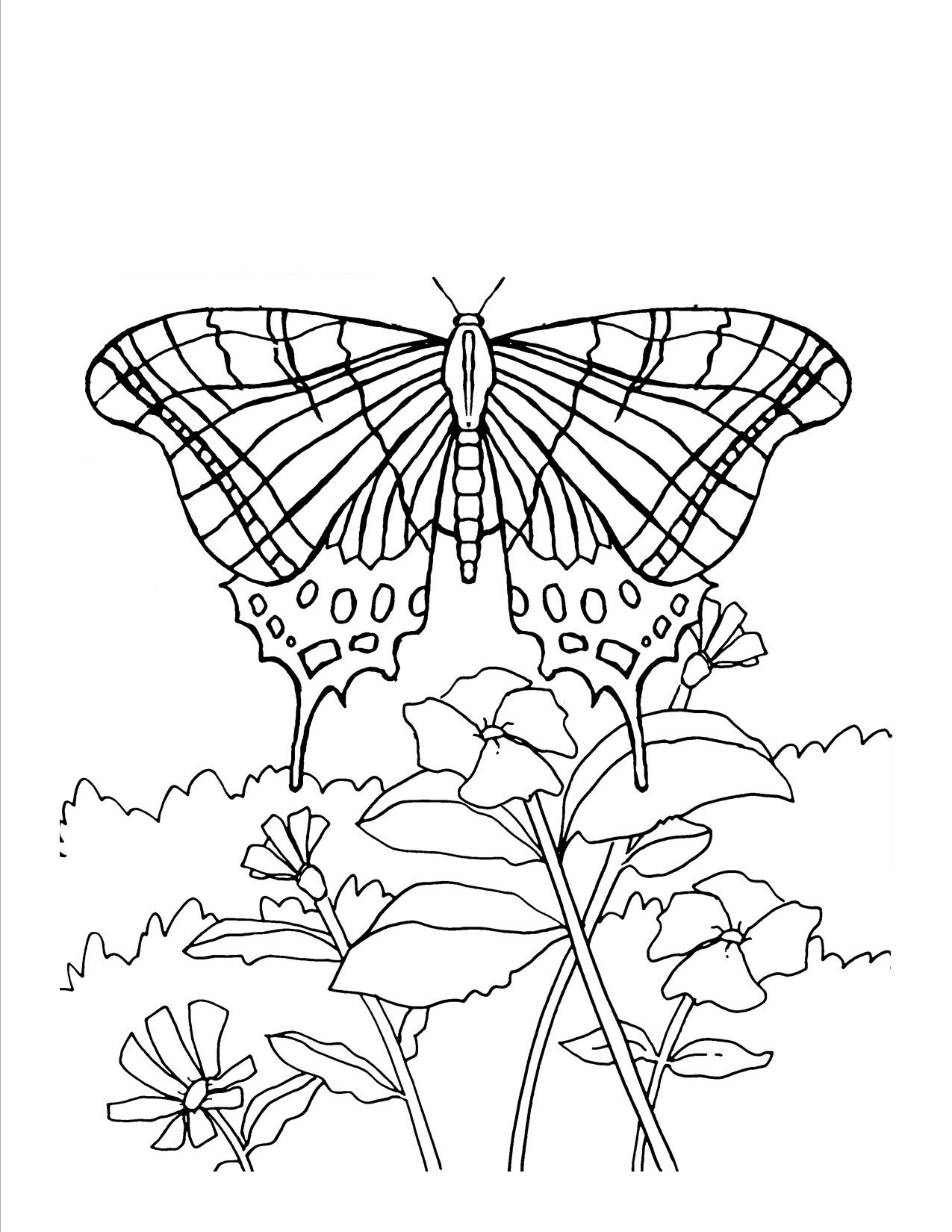 butterfly coloring pages for adults Only Coloring Pages